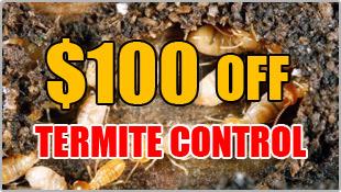 100% off Termite Control